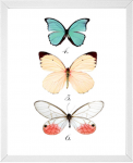 Butterfly Print from 14 Fun Summer Printables for FREE -Calmandcollected.us